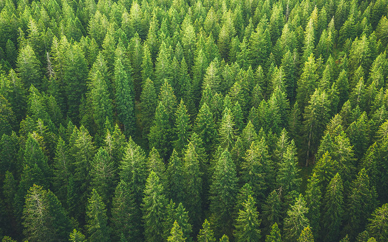 Forestry and Agriculture